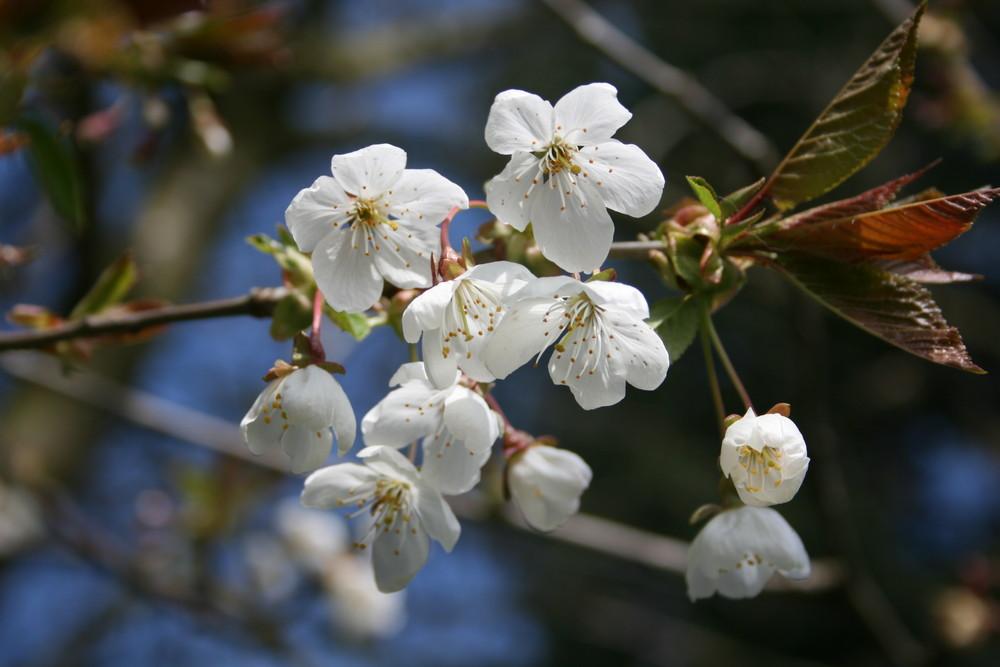 Frühlingserwachen in Ostholstein