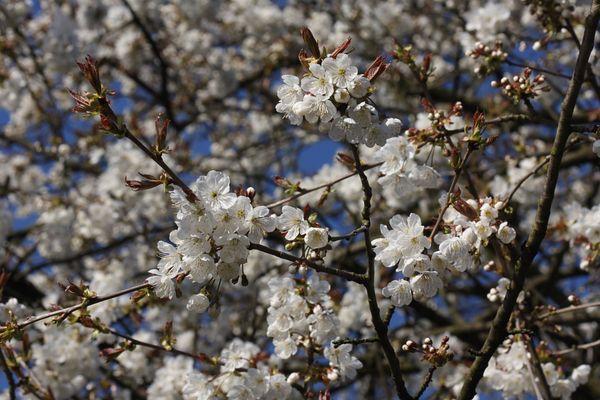 Frühlingserwachen, Leichlingen 17.04.2010
