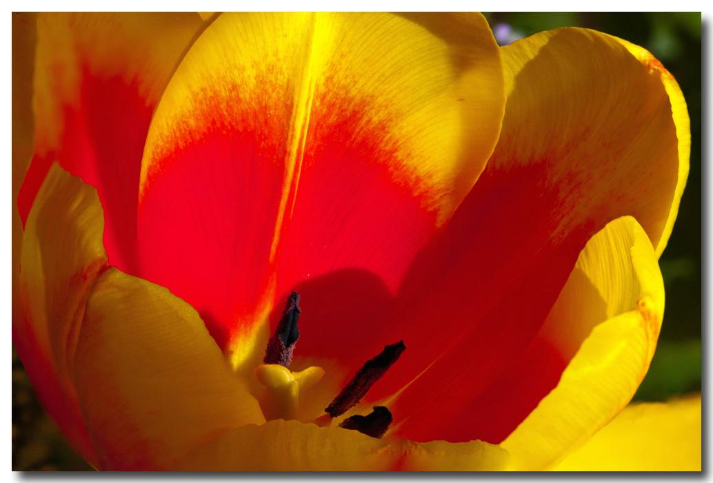 Frühlingserwachen - na endlich!
