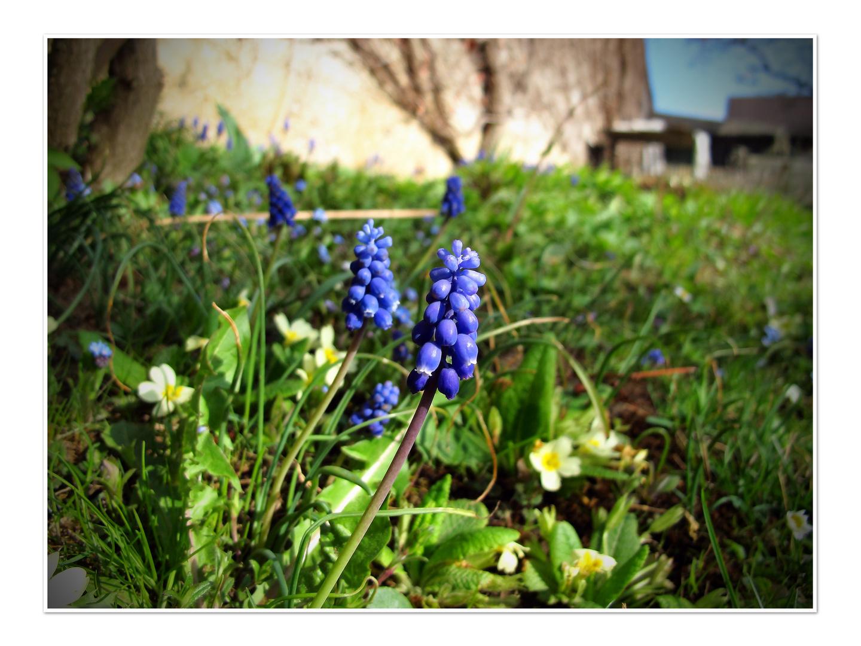 Frühlingserwachen1