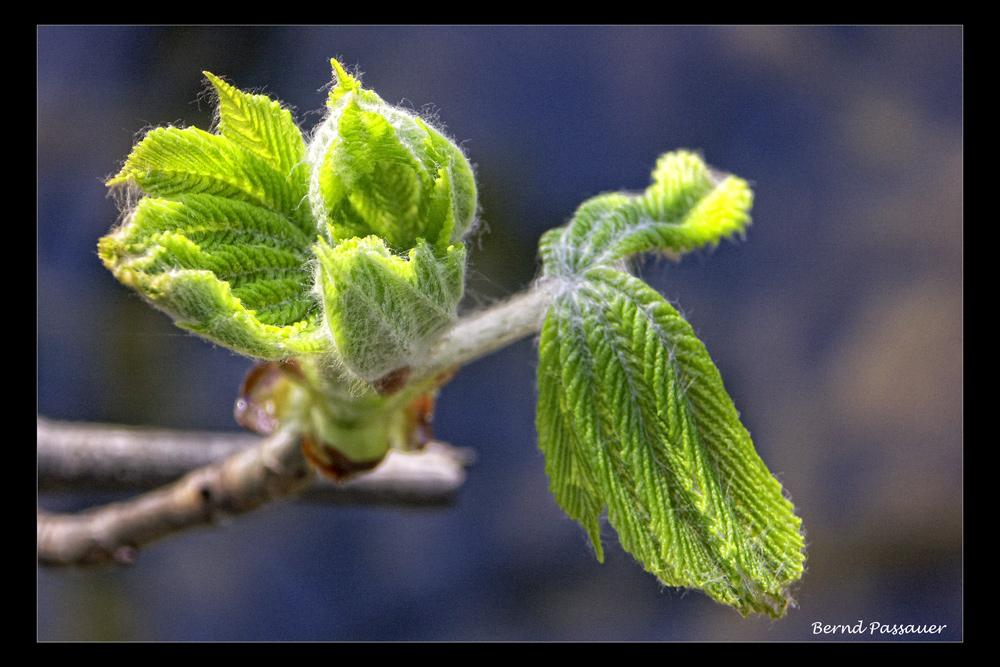 Frühlingserwachen_1