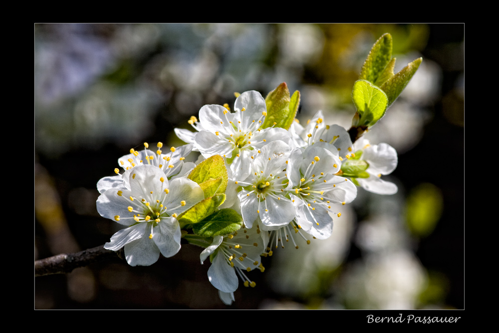 Frühlingserwachen_2