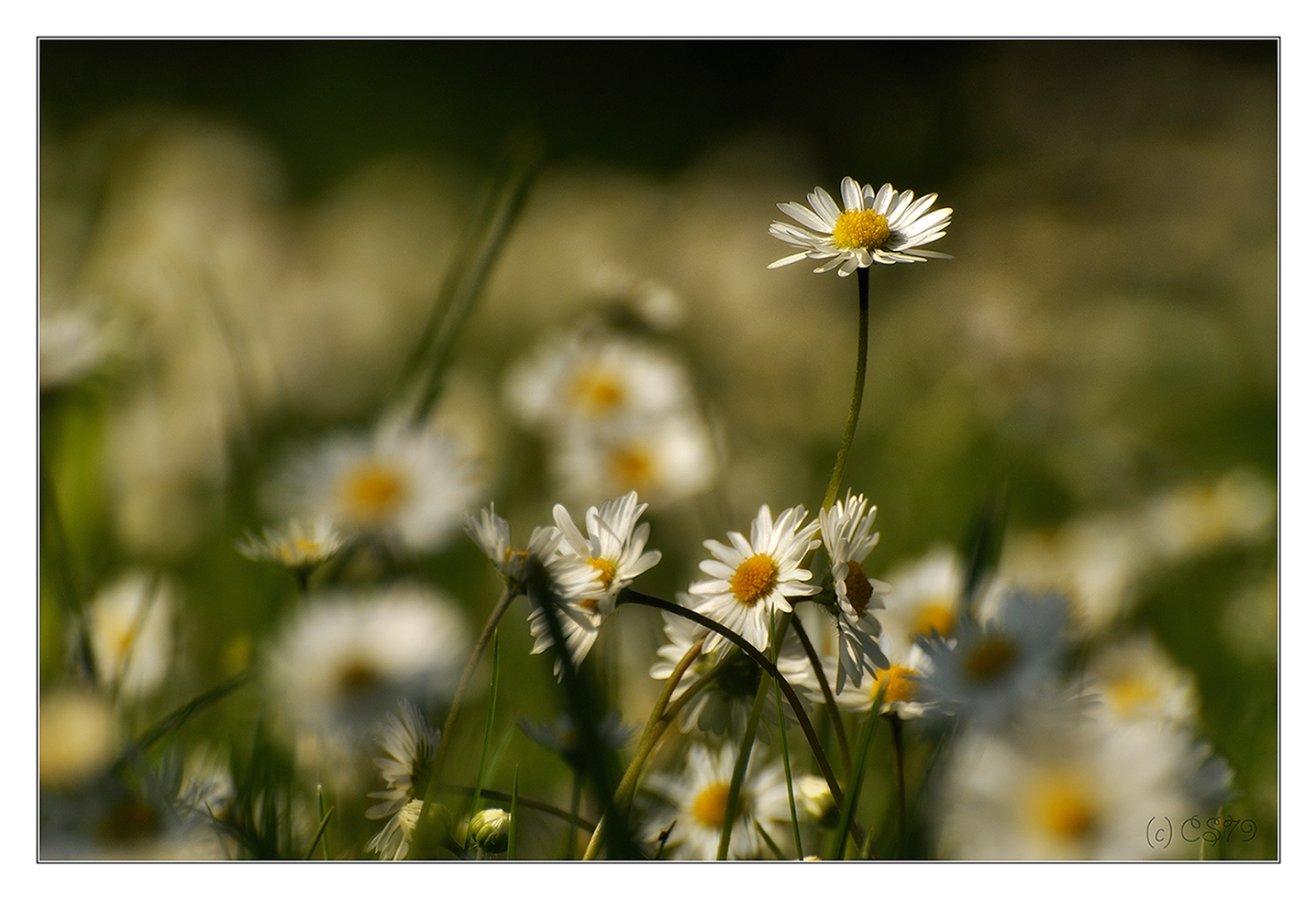 Frühlingserwarten
