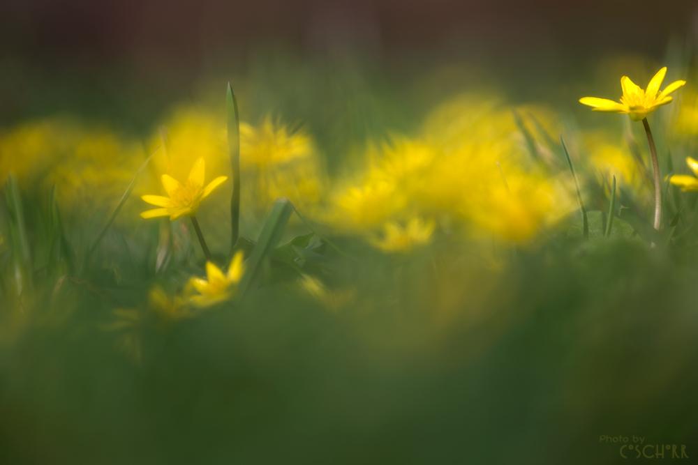 Frühlingseuphorie