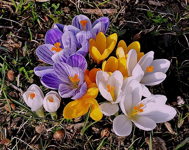 Frühlingsexplosion ...