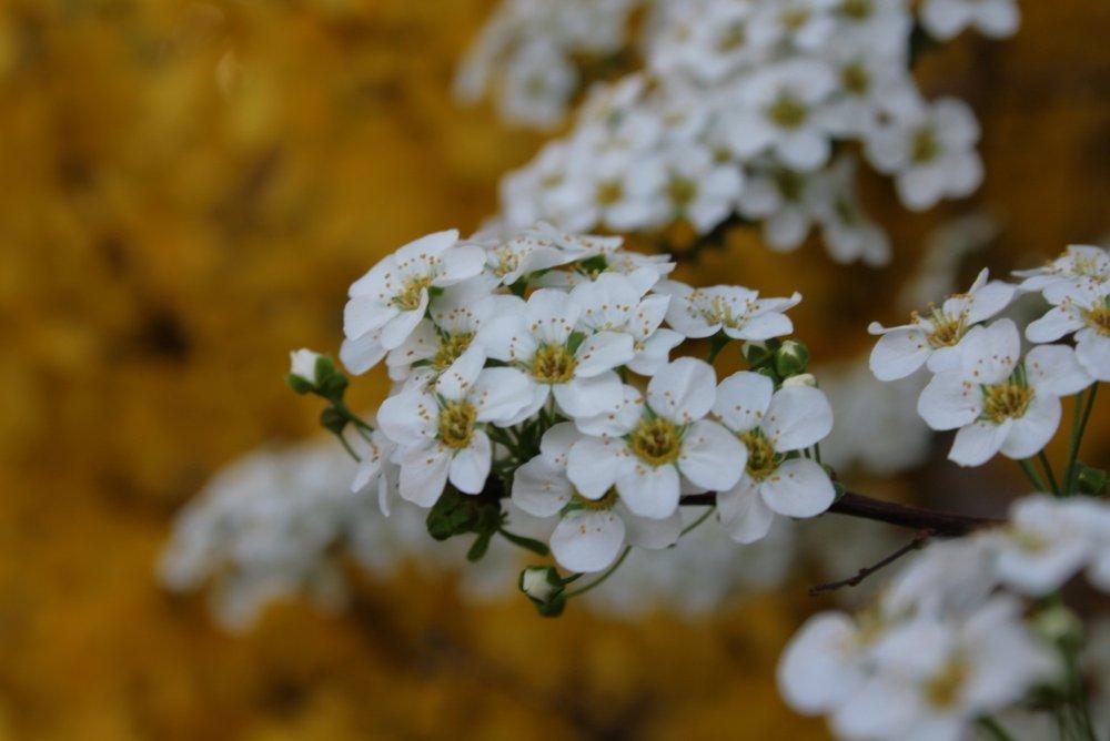 Frühlingsexplosion