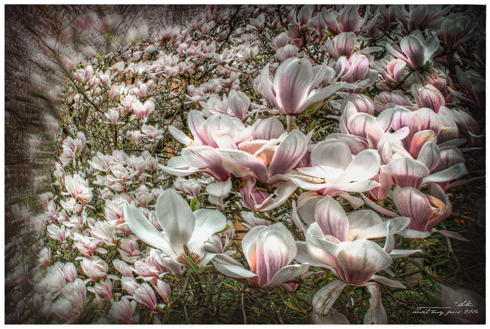 Frühlingsexplosion...