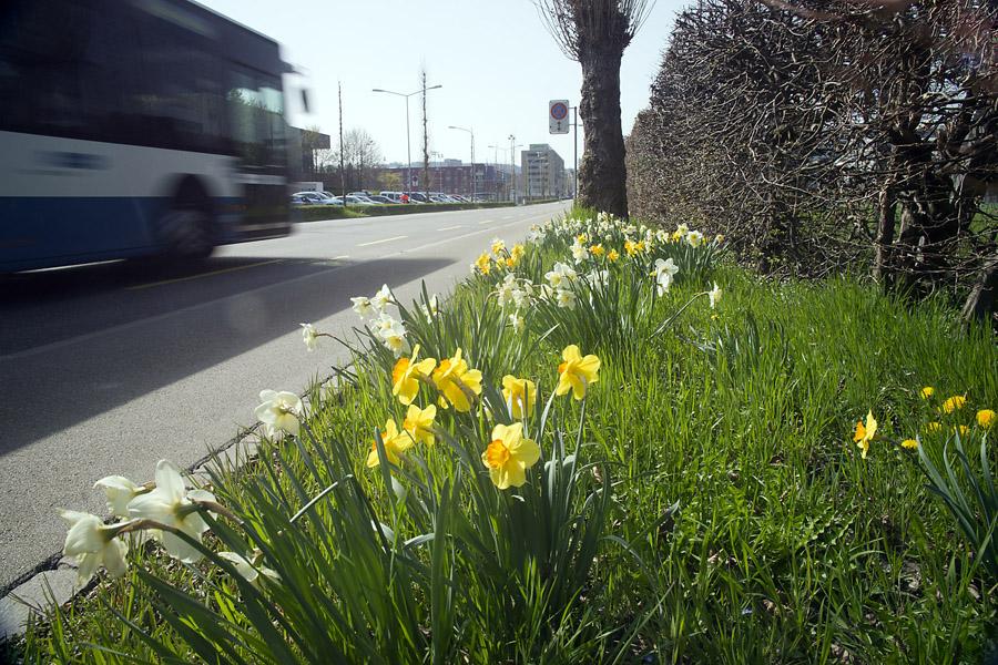 Frühlingsfahrt im Bus