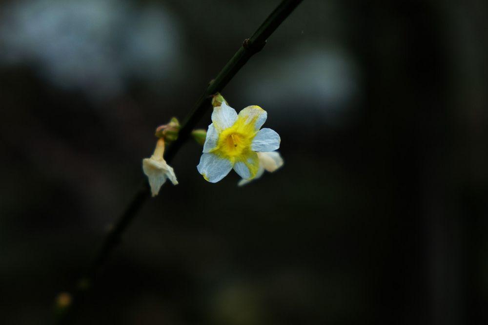 Frühlingsfarbe