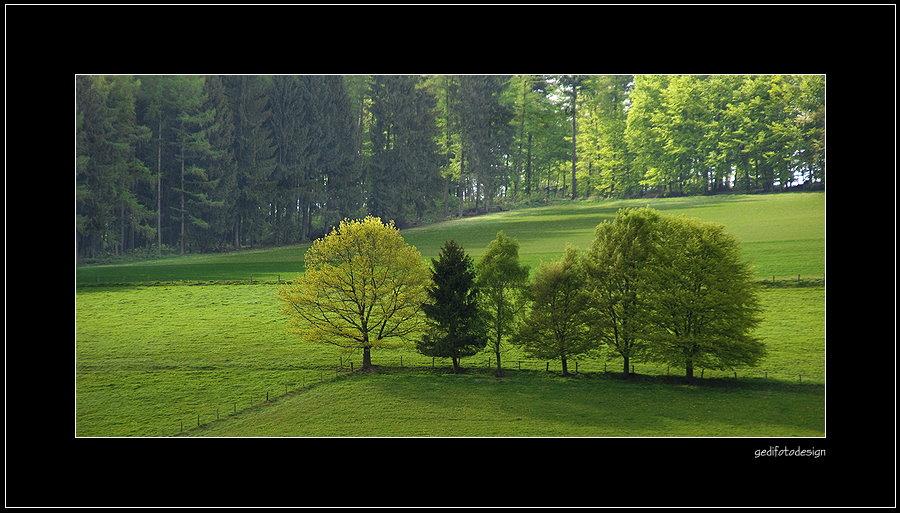 Frühlingsfarbe ...