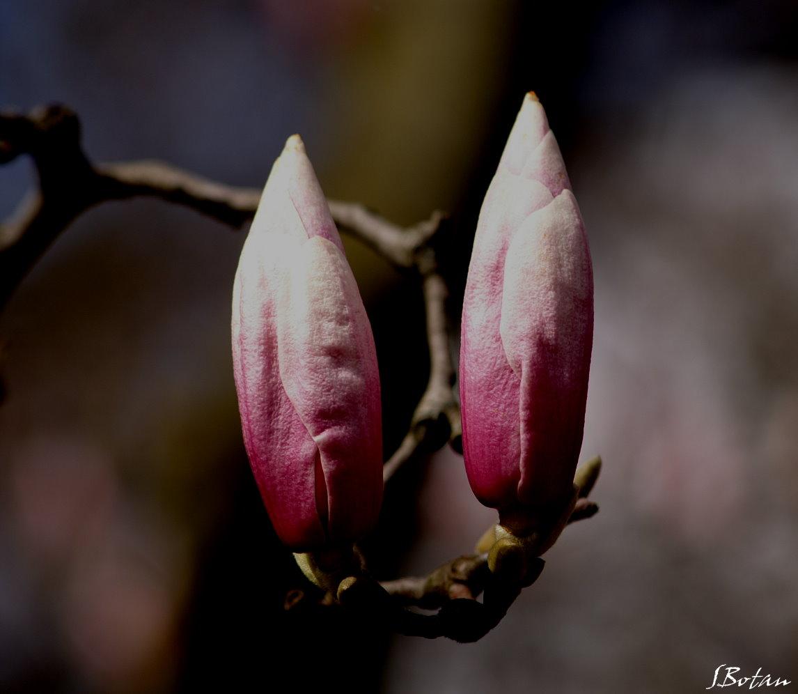 Frühlingsfarben  2