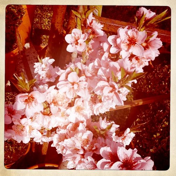 Frühlingsfarben