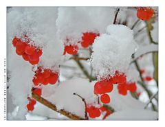 Frühlingsfarben :-)