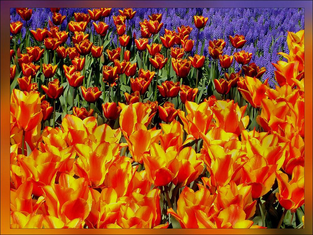 Frühlingsfarben..