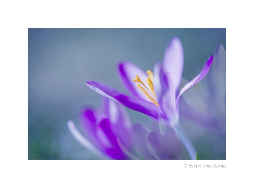 Frühlingsfarben ....