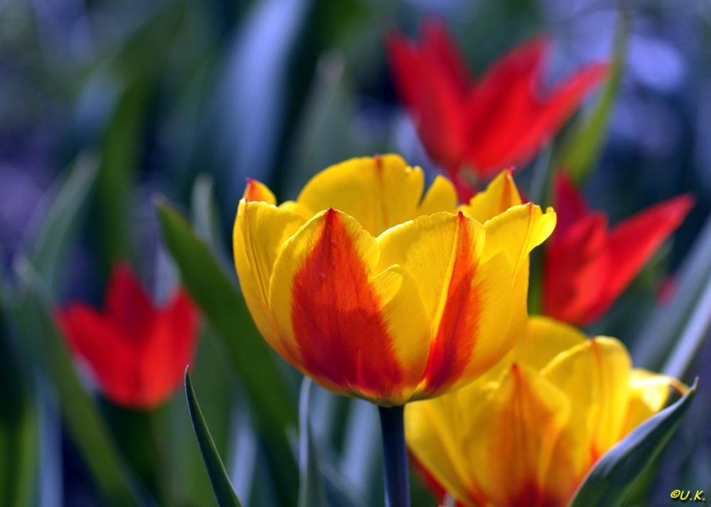 Frühlingsfarben für meinen Schatz...