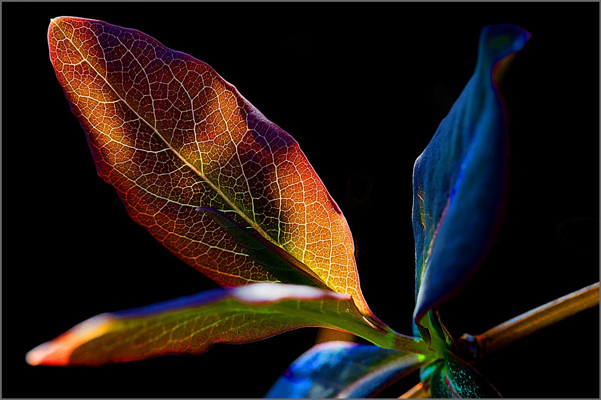 Frühlingsfarben - oder die Bäume schlagen aus