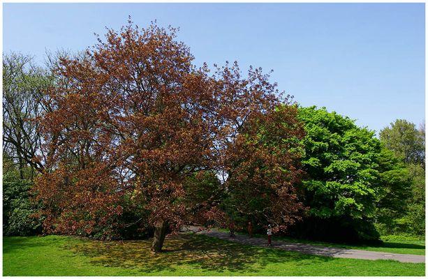 Frühlingsfarben: Trees