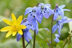 Frühlingsfarbsinfonie