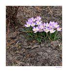 Frühlingsfleck