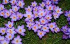 Frühlingsfreude