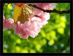 Frühlingsfreuden 5