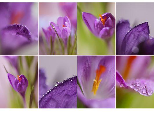 Frühlingsfrisch