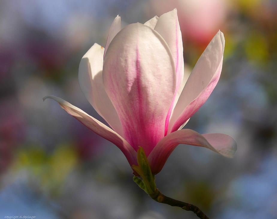 Frühlingsgedanken.....