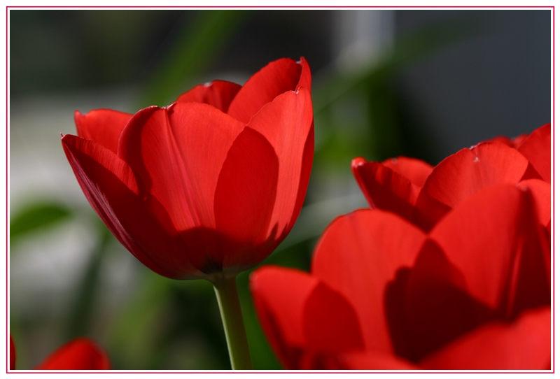 Frühlingsgedanken ...........