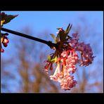 Frühlingsgefühle ;)