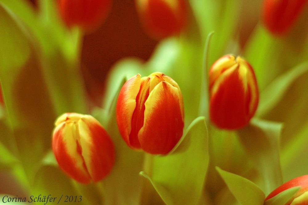 ...Frühlingsgefühle...