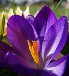 Frühlingsgefühle.......