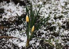 Frühlingsgefühle im Winter...