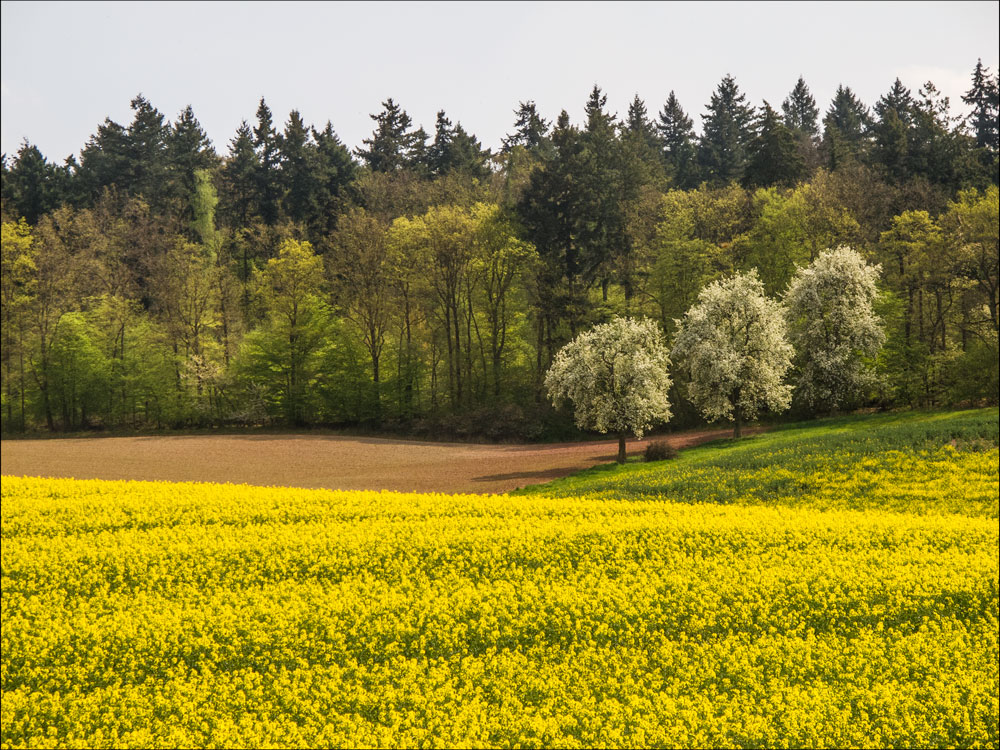 Frühlingsgelb