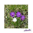 Frühlingsgemälde