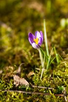Frühlingsgemüse 3