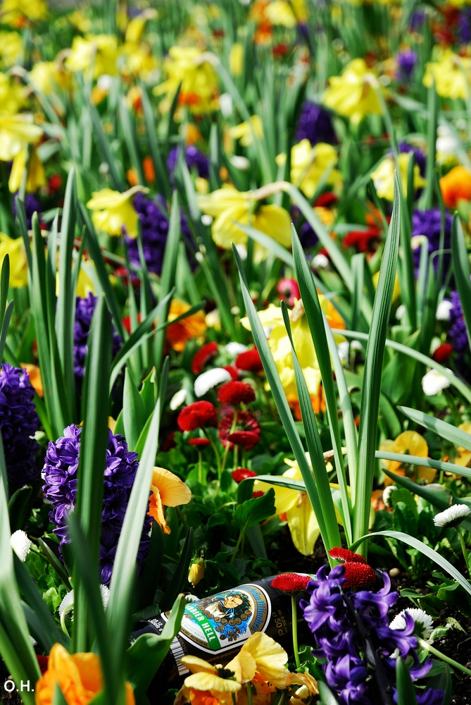 Frühlingsgenuss
