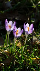 Frühlingsglanz