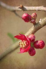 Frühlingsglaube oder: Das Prinzip Hoffnung