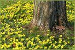 Frühlingsglaube - Reloded -