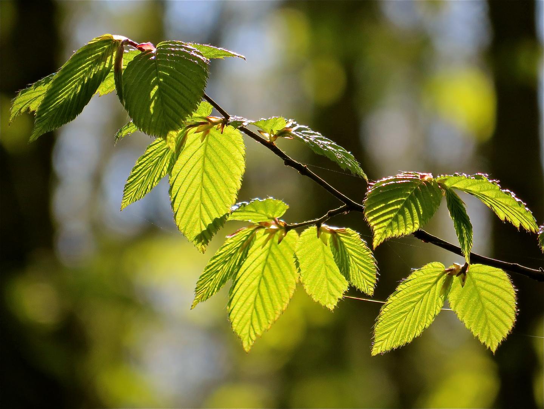 ...Frühlingsgrün !!!...