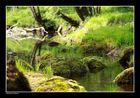 Frühlingsgrün am Bachlauf ...