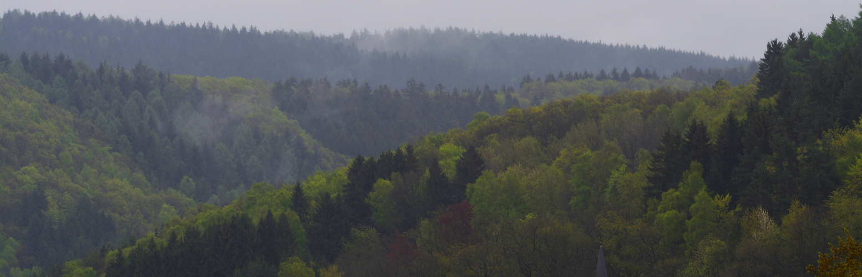 frühlingsgrüne sauerländische Wälder nach Regengüssen Ende April