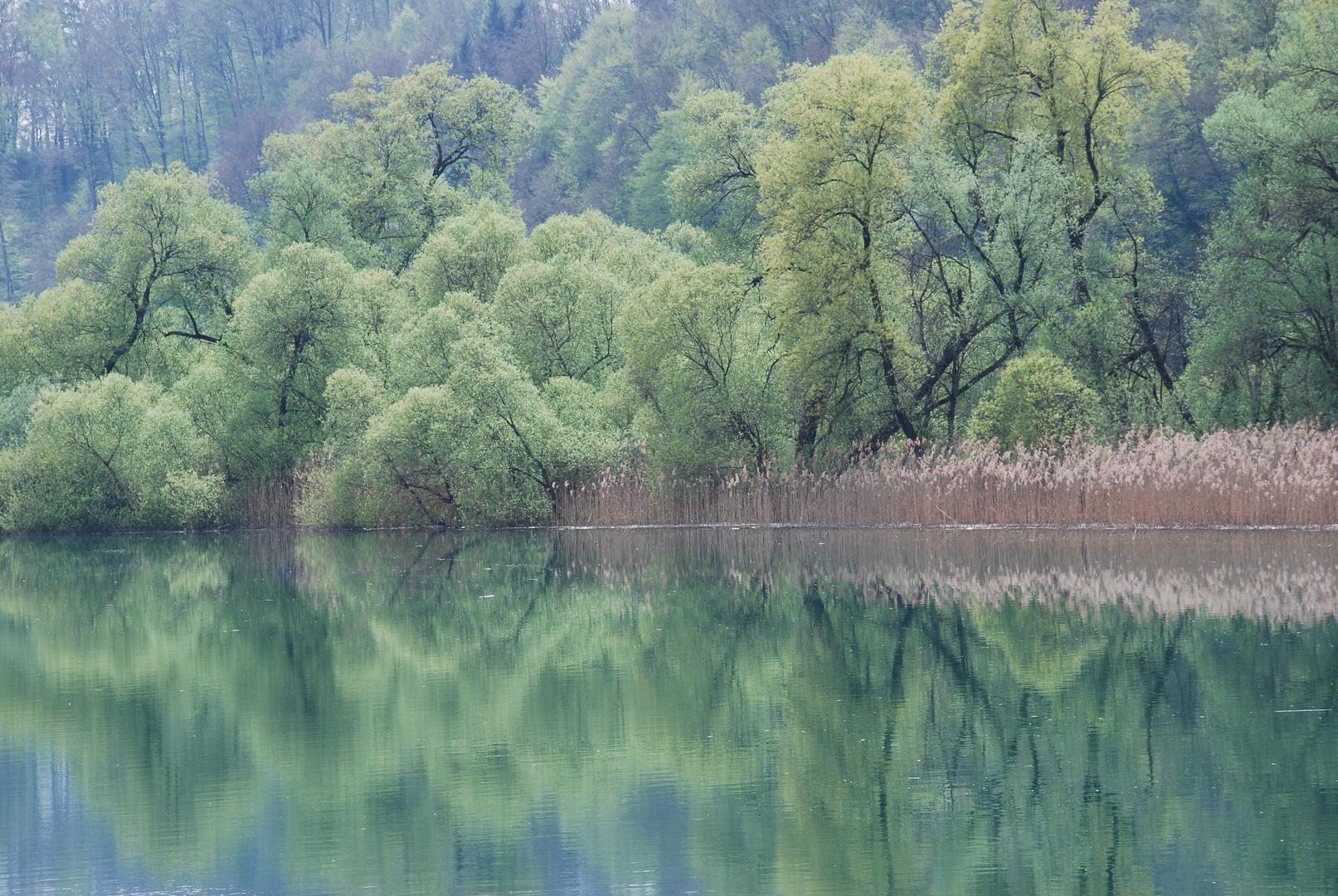 Frühlingsgrüne Wasserwelt