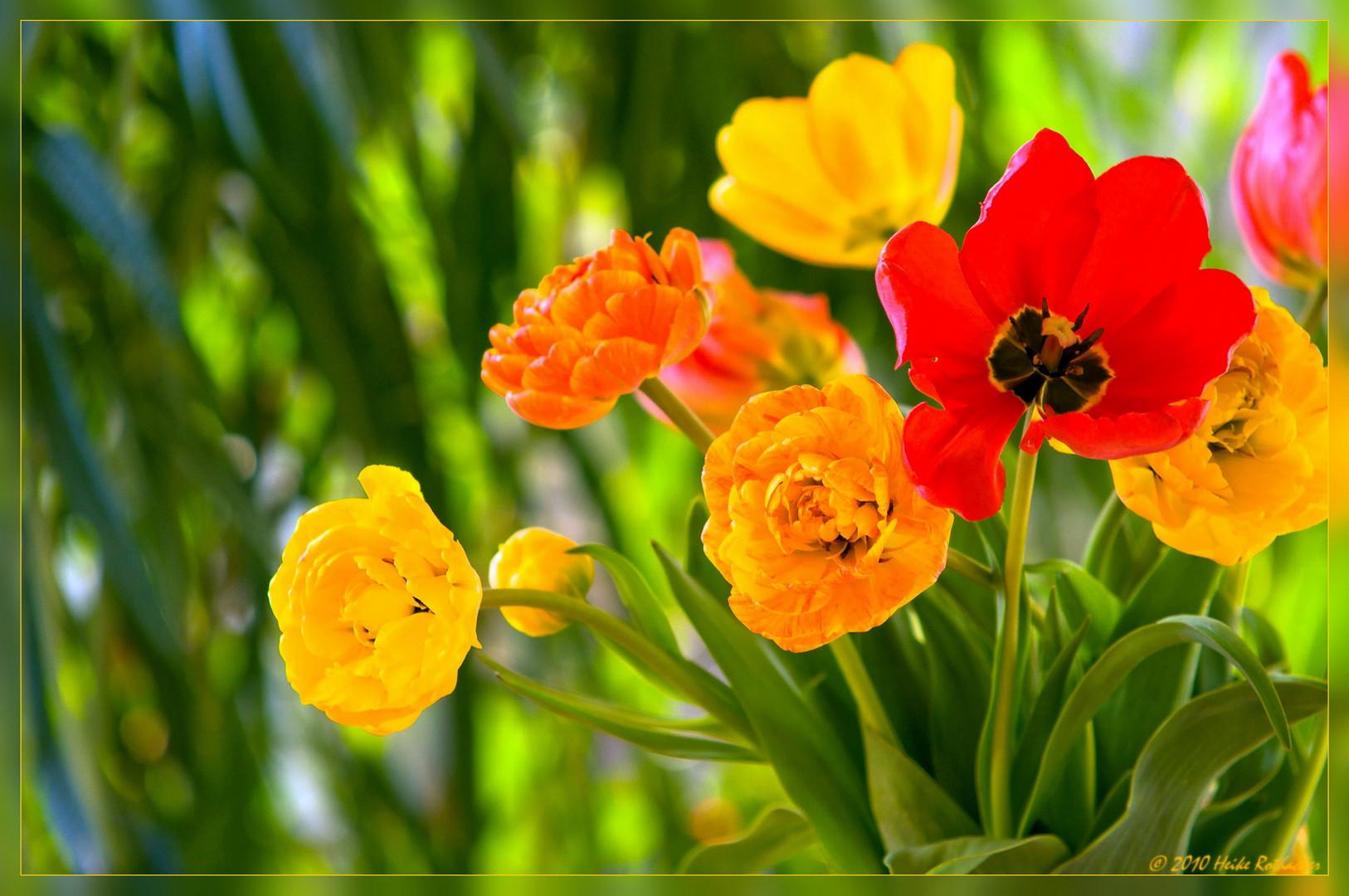 Frühlingsgrüße