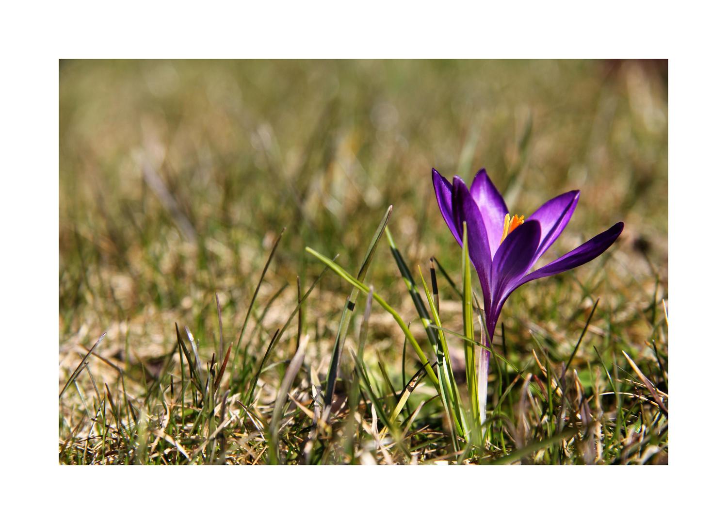 """""""Frühlingsgrüße aus dem Garten...!"""""""