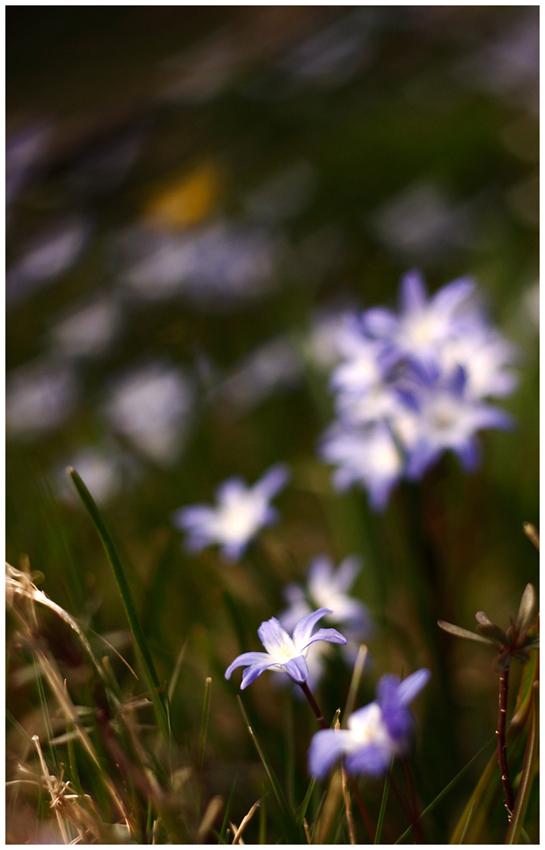 Frühlingsgrüße II