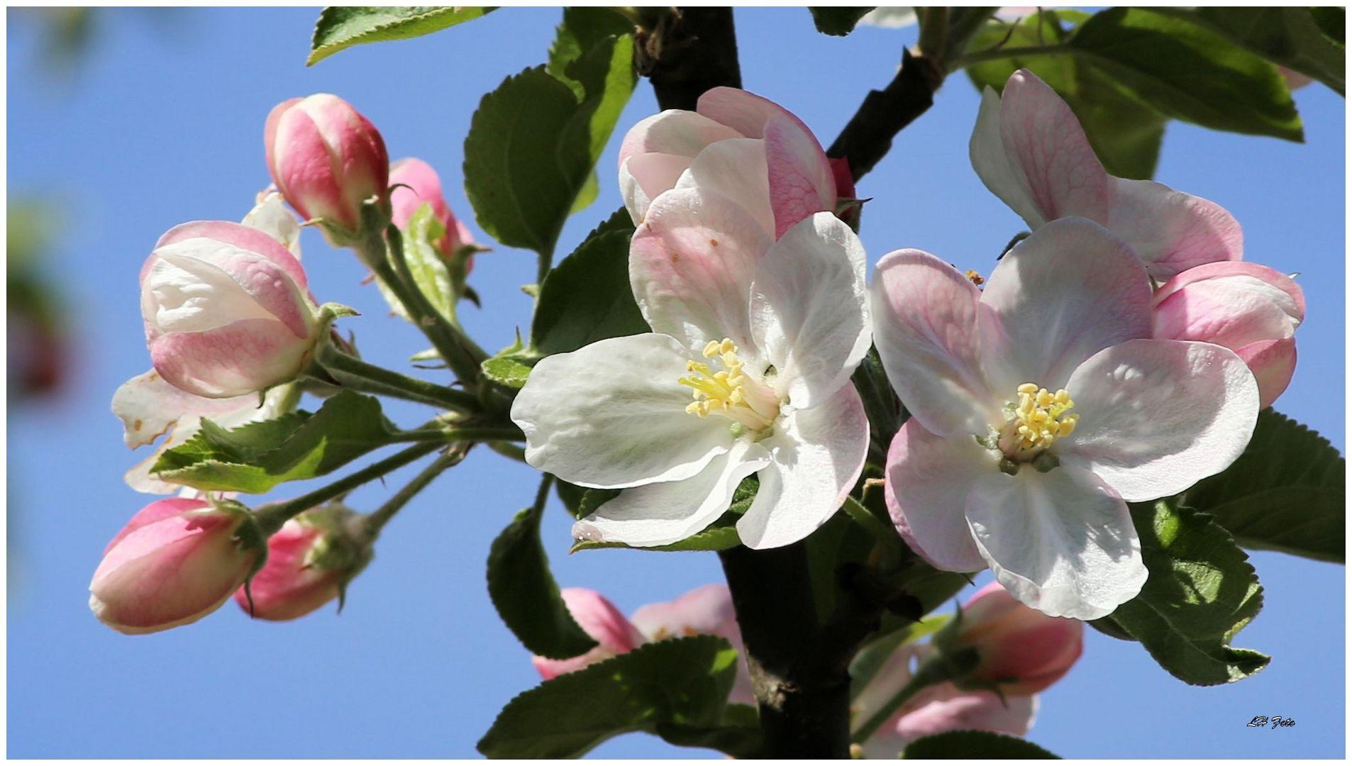 Frühlingsgrüße vom Nachbarn...