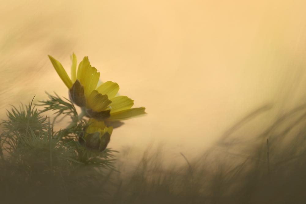 Frühlingsgrüße vom Raná