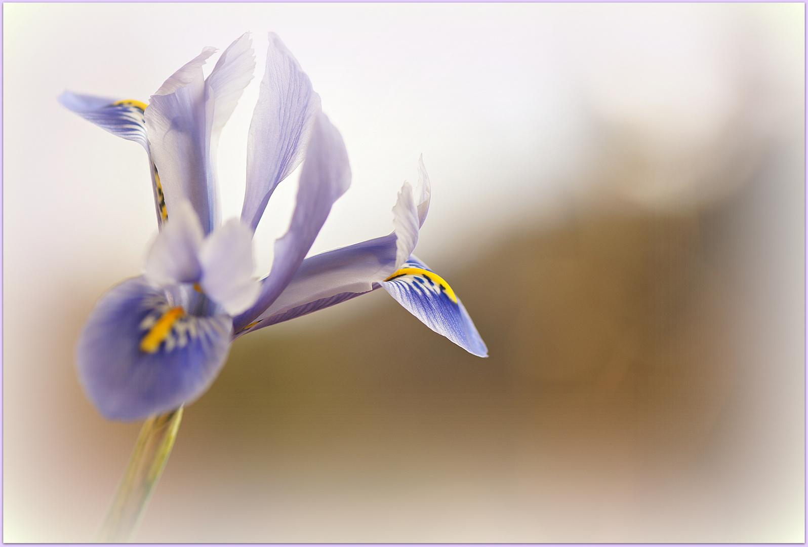 Frühlingsgruß ....